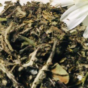Organic White Lotus